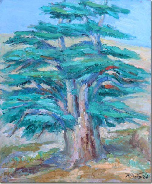 Cedar of Lebanon - Cèdre du Liban