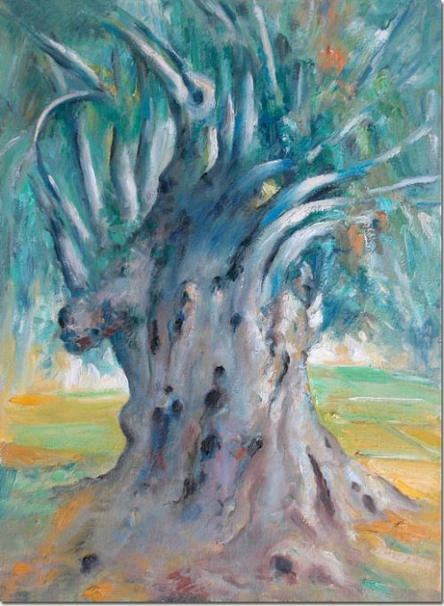The Thousand-Year-Old Olive Tree - L'olivier Millénnaire