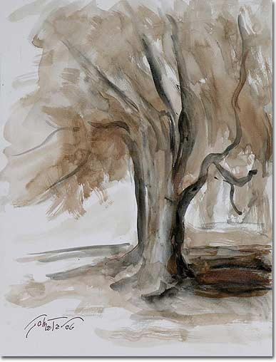 Oak Tree - Chêne