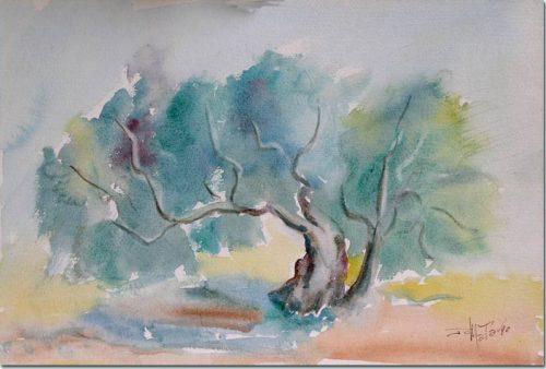 Olives Trees - Oliviers